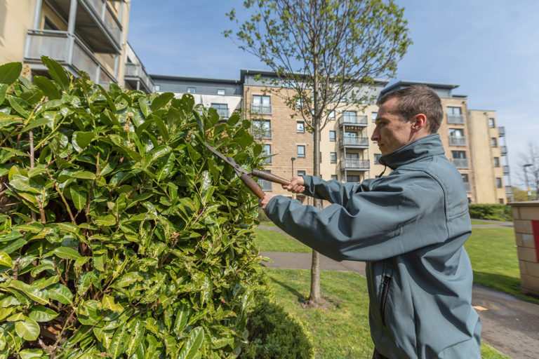 Hacking & Paterson, Hawkhill Close Leith Snowdrop Services provide Maintenance to Grounds in Leith