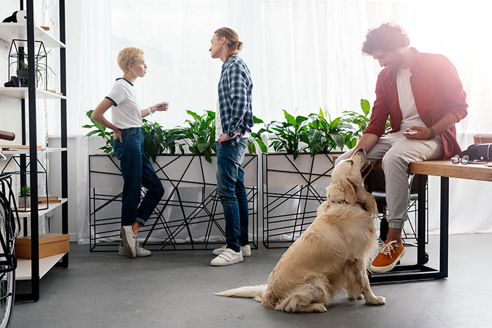 Should Dogs Be Allowed In The Office? Dogs In The Office 1.jpg