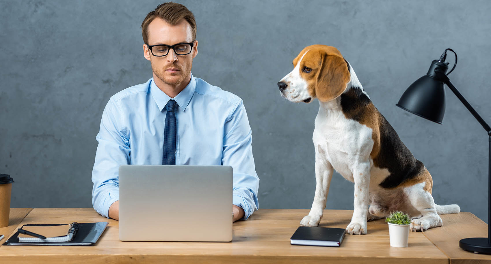 Should Dogs Be Allowed In The Office? Dogs In The Office